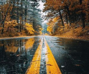 autumn, rain, and nature image