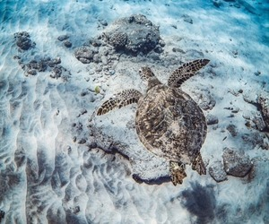 nature, animal, and ocean image