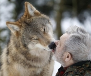 grey wolf, man, and winter image