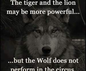 wolf, quotes, and tiger image