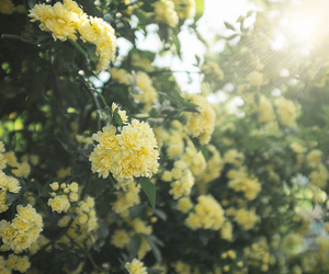 vintage, flowers, and flores image
