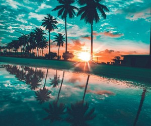 landscape, palm trees, and sky image
