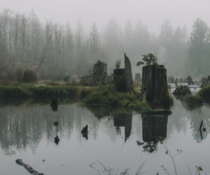 aesthetic, forest, and lake image