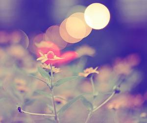 bokeh, ugh, and flowers image