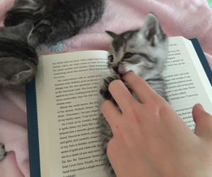 cat, book, and animal image