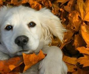 adorable, fall, and leaves image