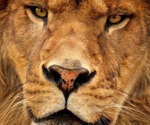 animal, close, and nature image