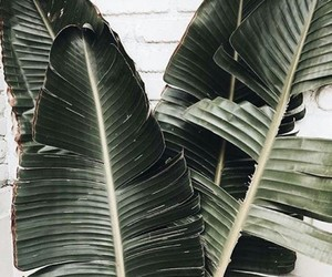 plants, green, and theme image