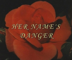 rose, aesthetic, and danger image