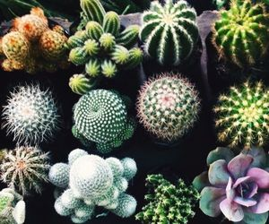 cactus, plants, and green image