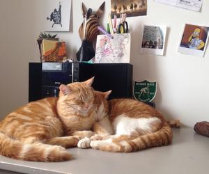 cat, cute cat, and kitten image