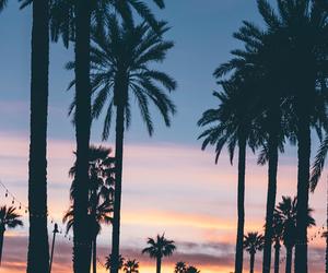 palm tree, sunset, and tumbrl image