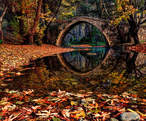 autumn, leaves, and bridge image