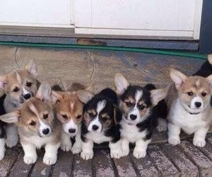 dogs, adorable, and animals image