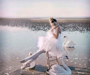 Swan, ballet, and dance image