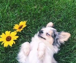 aesthetic, flowers, and dogs image
