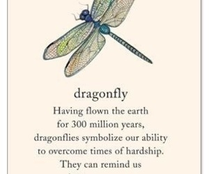 dragonfly, idea, and tattoo image