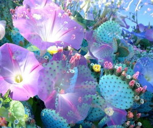 flowers, blue, and cactus image