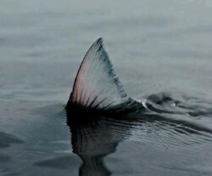 mermaid, water, and fish image