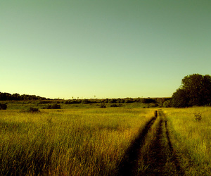 field, nature, and summer image