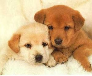 animals, puppies, and cutest couple image