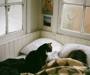 cat, bed, and vintage image