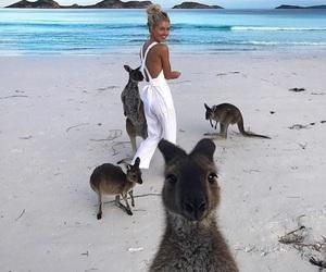 summer, beach, and kangaroo image