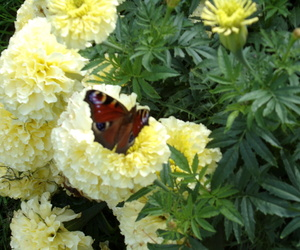 butterfly, nature, and papillion image