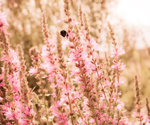 autumn, bee, and depth of field image