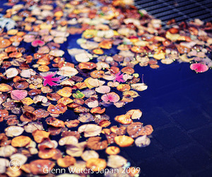 autumn, fall, and float image