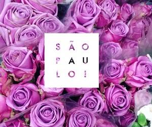 brasil, roxo, and love image