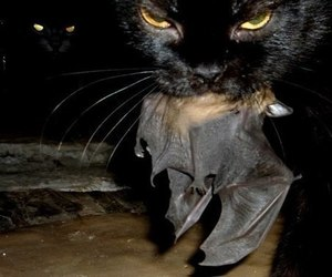 cat, bat, and black image