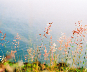 flowers, nature, and sea image