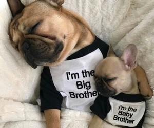 big brother, brothers, and lovely image