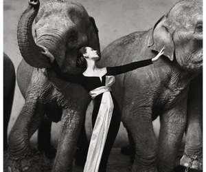elephant, richard avedon, and black and white image