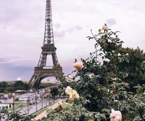 cities, flowers, and city image