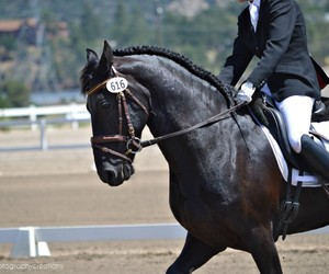 black, dressage, and photography image