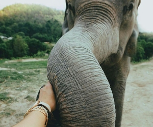 animal, love, and connection image