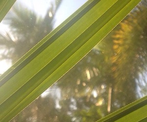 green, plants, and palm treee image