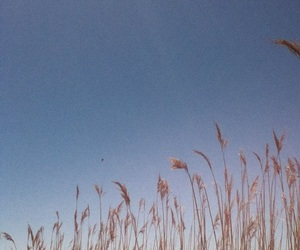 blue, clear, and reeds image