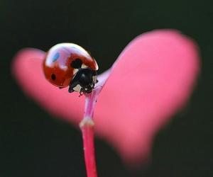 ladybug, macro, and nature image