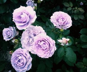 beautiful, botanical, and color image