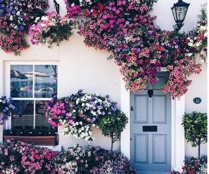 cosy, flowers, and pink image