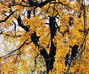 autumn and fall foliage image