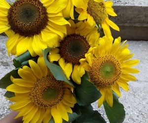 happiness, sunflower, and yellow image