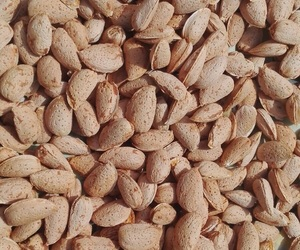 almonds, food, and photography image