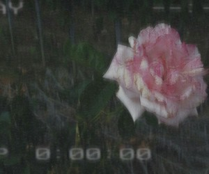 aesthetic, alternative, and pink image