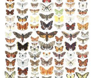 alternative, book, and butterflies image