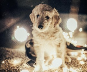 animals, dogs, and lights image
