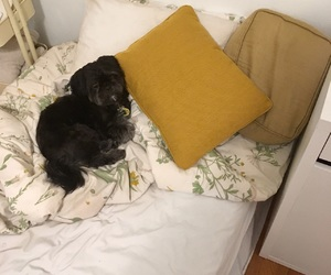 aesthetic, pillow, and puppy image